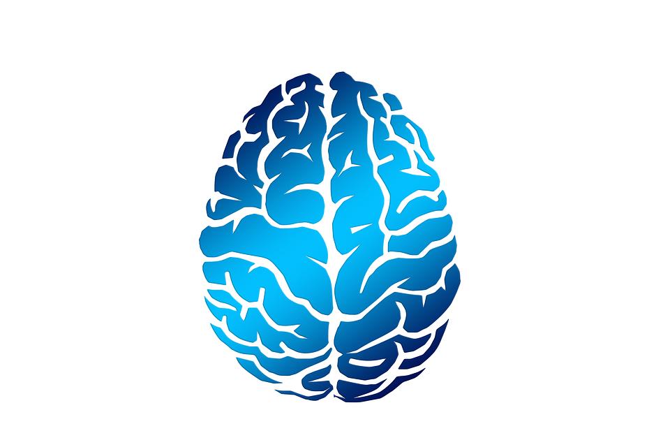 Un cerebro grande