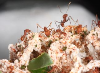Fascinante mundo de las hormigas