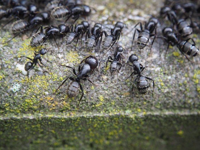 Las hormigas y su fascinante mundo