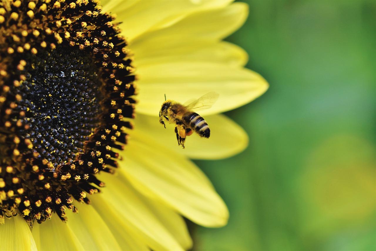 vuelo de las abejas