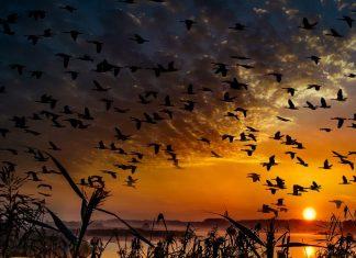 El vuelo de las aves