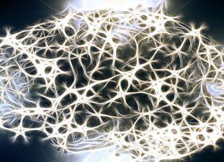 Las ondas ultralentas del cerebro tienen una gran importancia en la conciencia.
