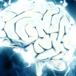 Científicos implantan cerebro en ratones