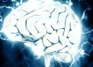 La vía Wnt. Un cerebro grande. El SpiNNaker. El secreto para generar neuronas nuevas. Científicos implantan cerebro en ratones