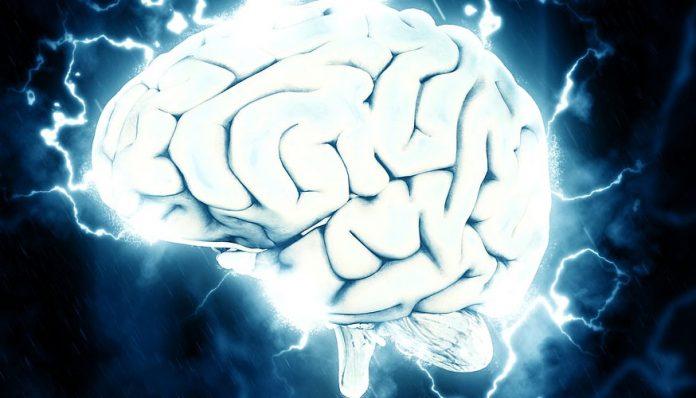 las neuronas. La vía Wnt. Un cerebro grande. El SpiNNaker. El secreto para generar neuronas nuevas. Científicos implantan cerebro en ratones