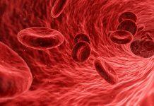 Creando sangre artificial en un laboratorio