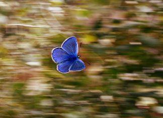 Novedosa cámara inspirada en la visibilidad de las mariposas