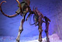 Encontrados fósiles de Mamut en México