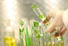 Biotecnología de los alimentos