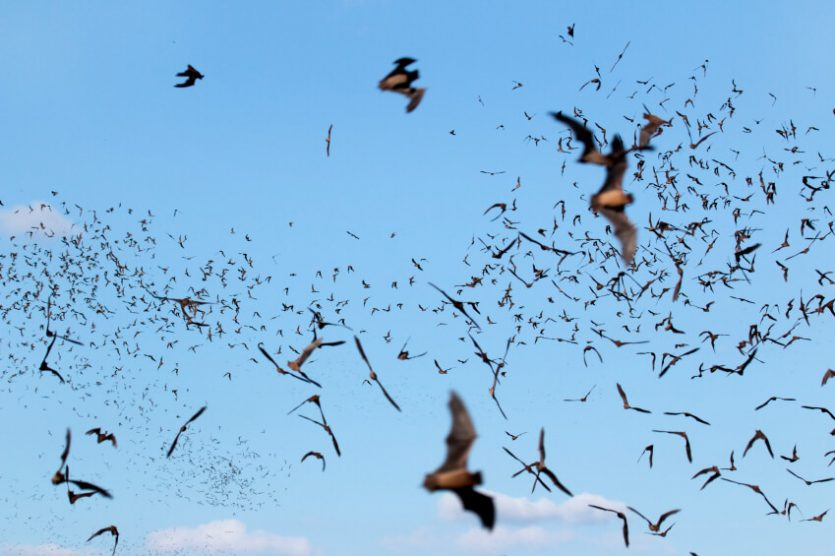 Los murciélagos y sus sonidos