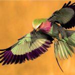 La ingeniería adaptativa de las aves