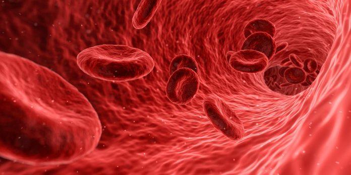 Crean neuronas humanas a partir de una muestra de sangre
