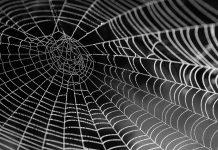 Las arañas tejen con una precisión magnifica