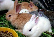 los conejos no demuestran miedo