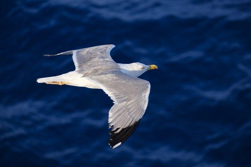 Clúster N, la clave en la brújula magnética de las aves