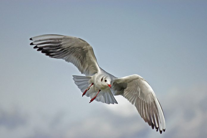 La brújula magnética de las aves