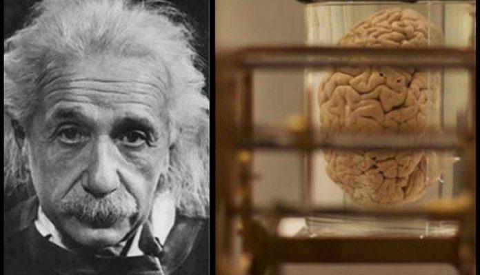 Einstein y la clave de su inteligencia