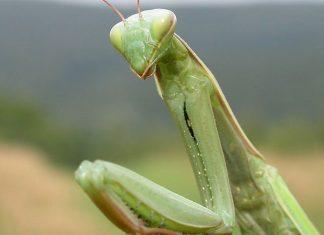 Los insectos duermen