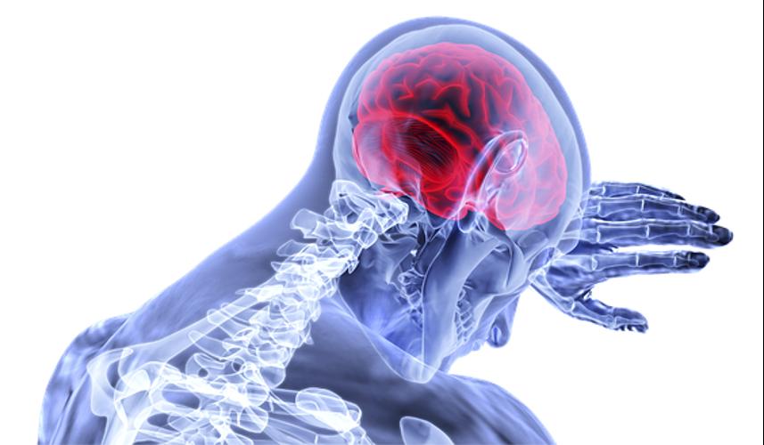 cerebro ante la Desidratación