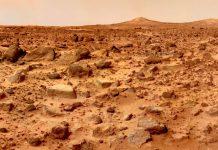 Plantas en suelos marcianos