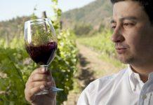 Enólogotiene la capacidad profesional para realizar el conjunto de actividades relativas a los métodos y técnicas de cultivo de viñedo
