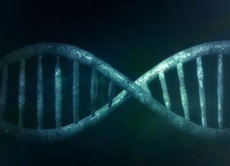 los genes