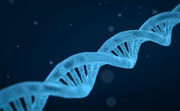 una molécula los genes
