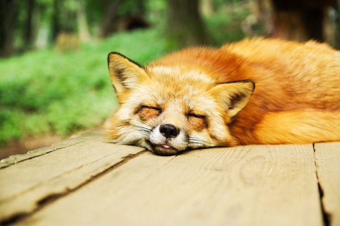 ¿Los animales pueden sobrevivir sin dormir?