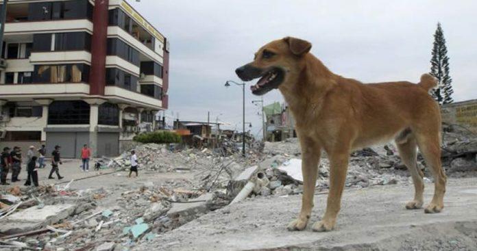 Los animales pueden pronosticar terremotos ¿Cierto o falso?