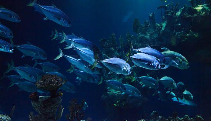 Curiosidades de algunos peces que te sorprenderán
