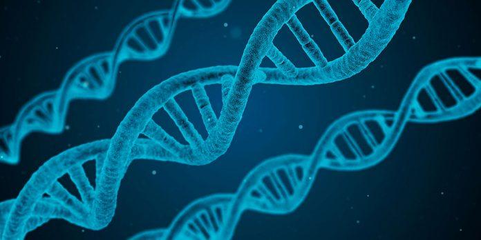 La Clonación Genética, avances en la medicina