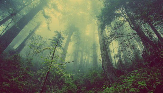 extinción de las plantas