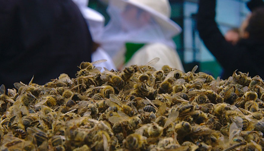 pesticidas que afectan a las abejas