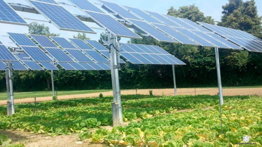 paneles solares agrofotovoltaicos